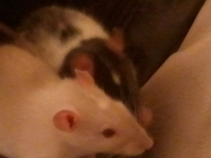 matching white spots on their heads